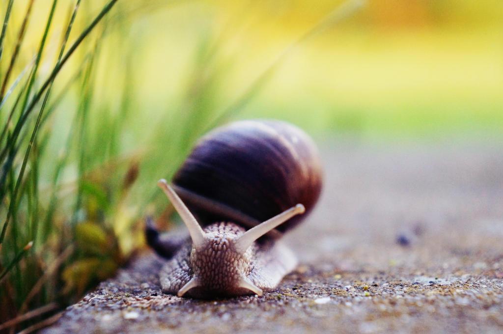 Snail by SofJae
