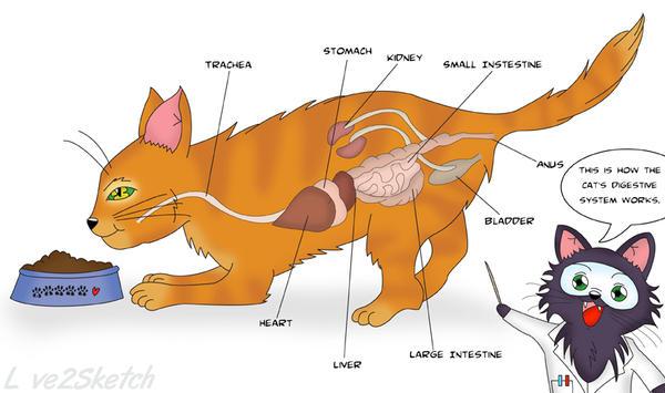 Cutaway Diagram By Lovetwosketch On Deviantart