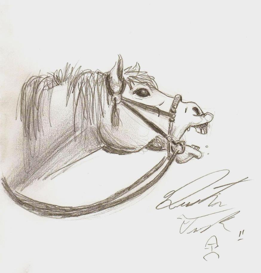 Horse yawning by Vaquero-boy