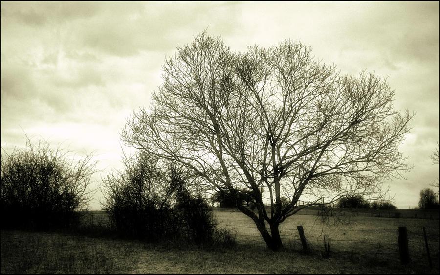 Desolation raw by LiveInPix