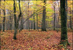 Colors of November by LiveInPix