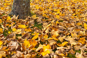 Dead leaves by LiveInPix