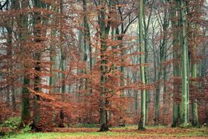 Spirit of autumn by LiveInPix