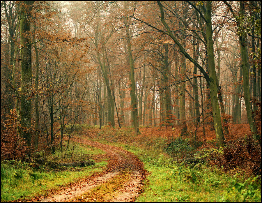 Forest path by LiveInPix
