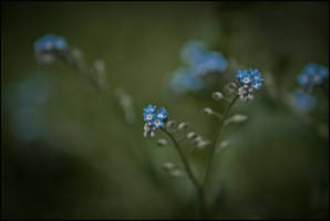 Blue buttons by LiveInPix