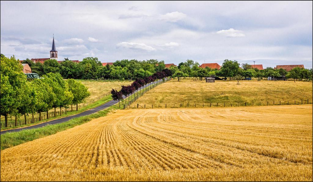 Summer country scene by LiveInPix
