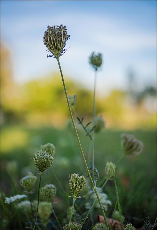 Wild flowers by LiveInPix