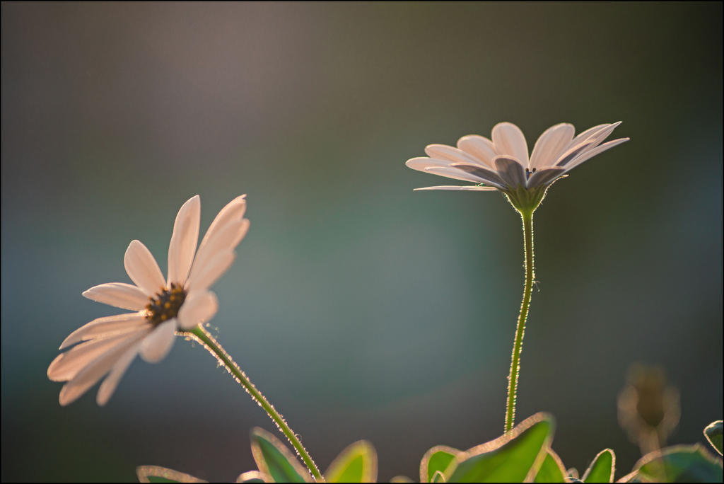 White sisters by LiveInPix