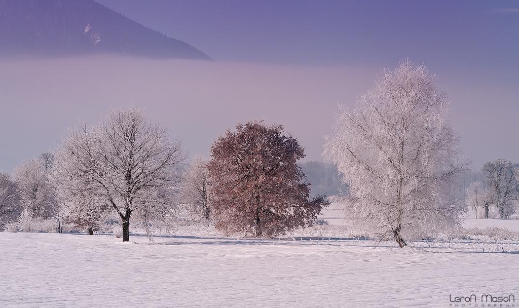 white wood by LeronMasoN