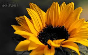 Sunshine by LeronMasoN