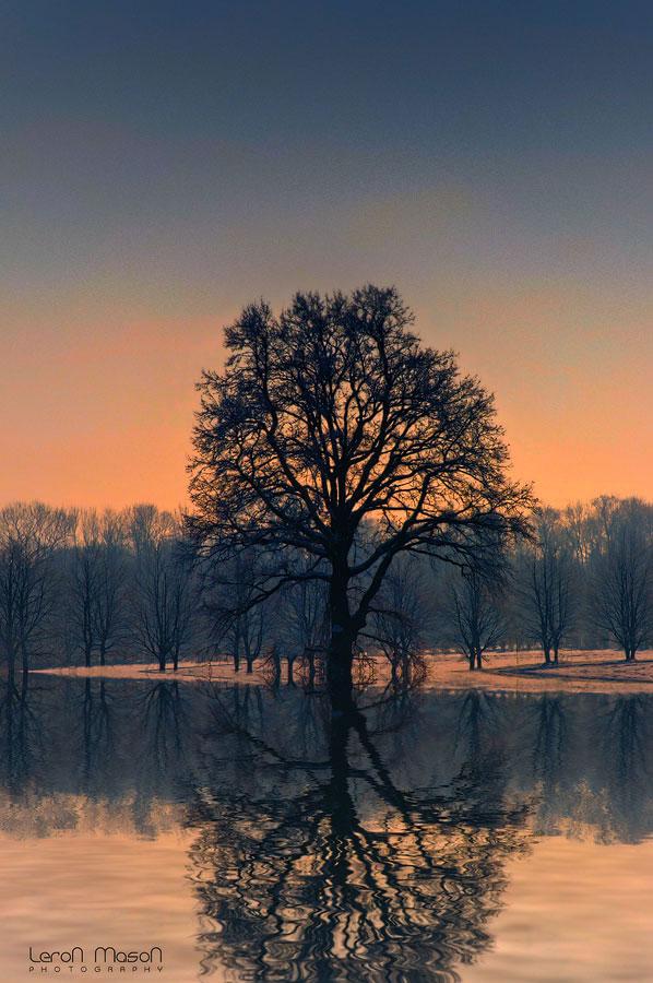 Magic Tree by LeronMasoN