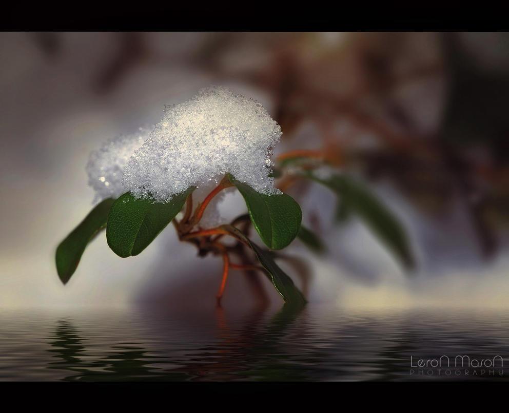 Snow_Crystals by LeronMasoN