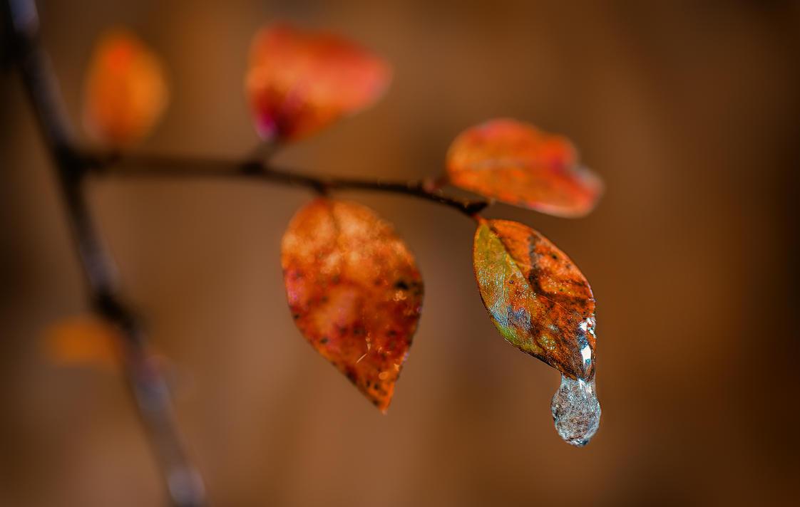 Autumn_2014_3 by LeronMasoN