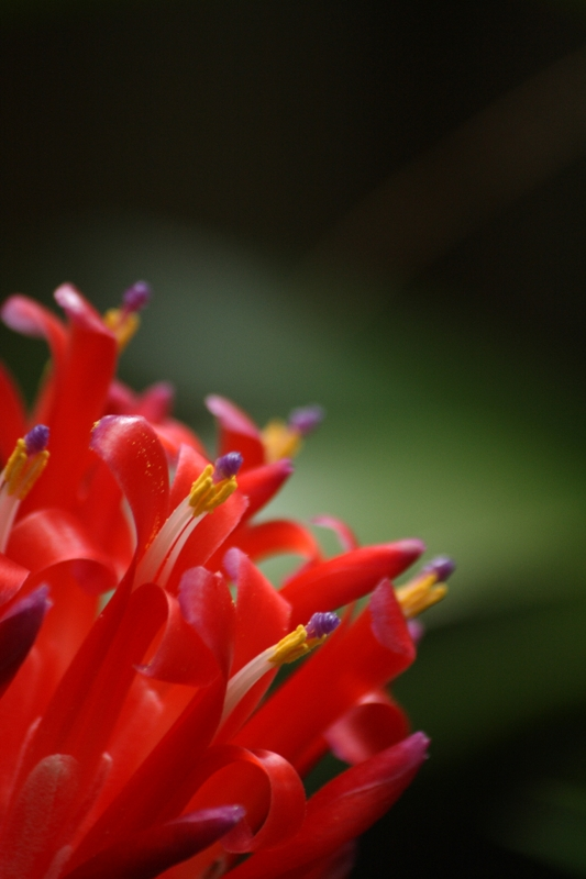 Shay's Bromeliad by ChelzS