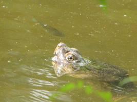 Turtle by DisneyPrincessNeeNee