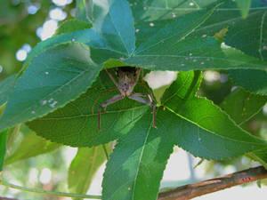a bug hiding between leaves
