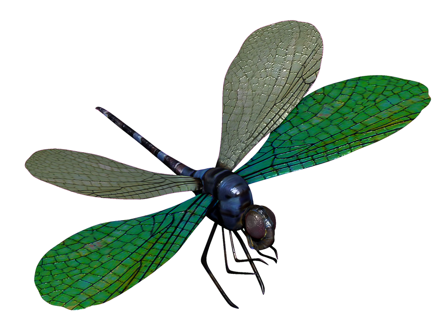 Dragonfly Transparent Png Blue dragonfly 3d model by