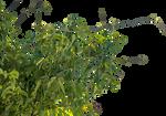 Plant 032