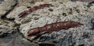 Darworms