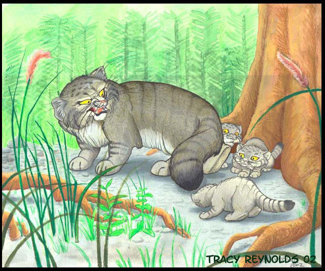 pallas cat family by calicougar on deviantart