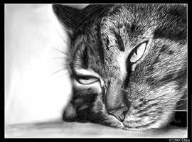 sleepy or not... by drtsanchez