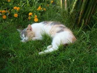 My cat Mya :3 by xMepux