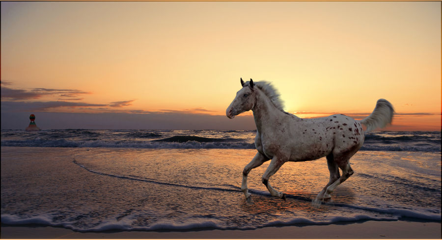 Appaloosa on the Beach