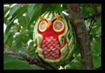 tropic-owl