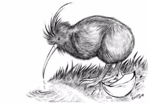 Inktober #8: Kiwi Bird