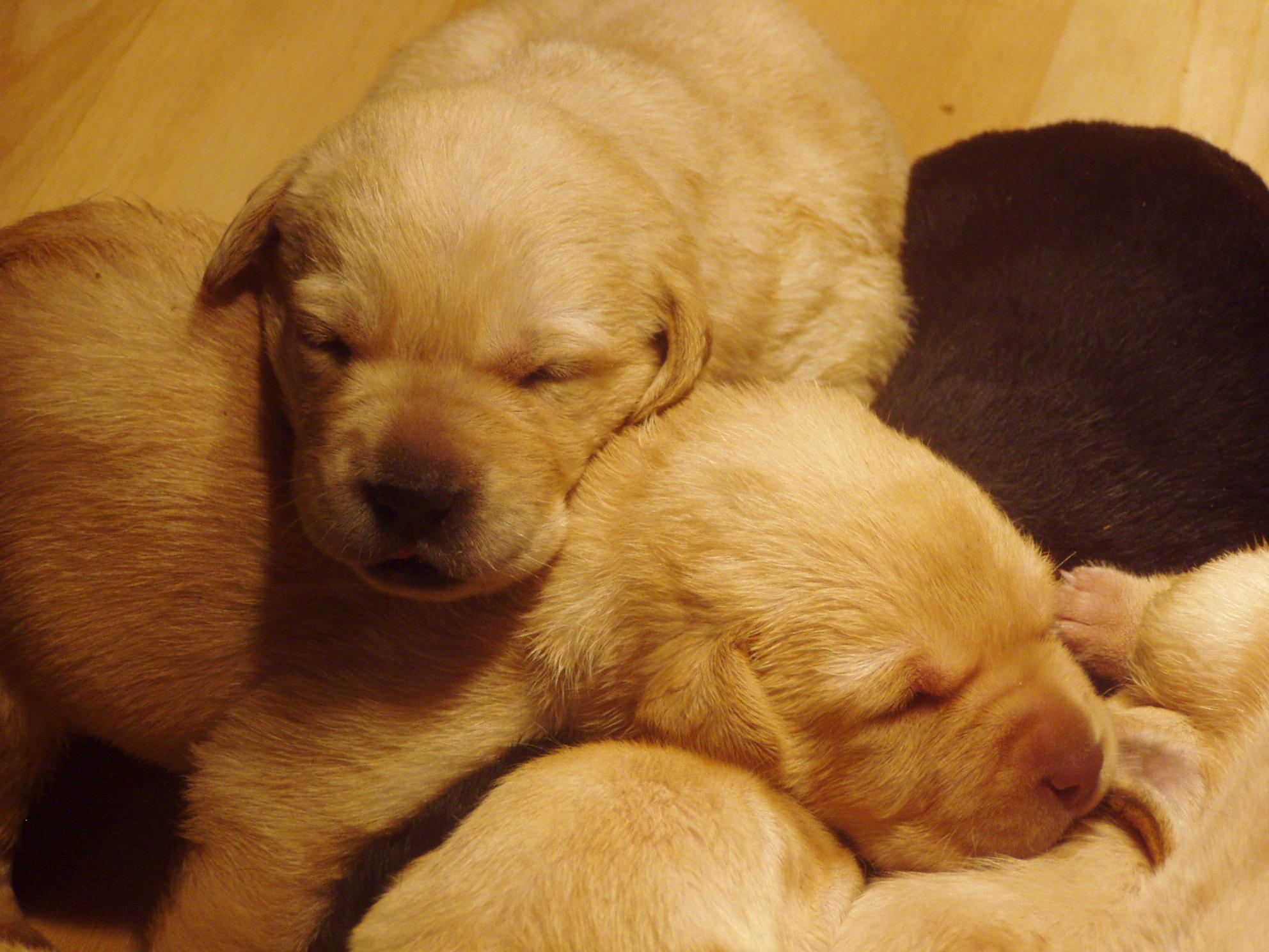 newest puppies