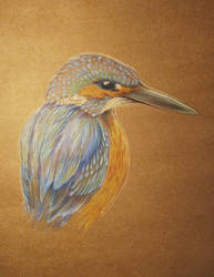 Kingfisher sketch