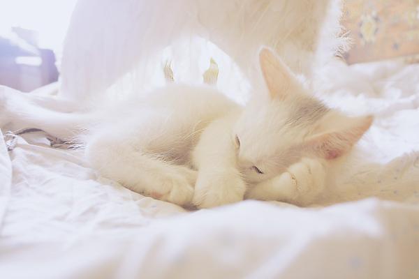 Angel sleeps in my bed by Emmatyan