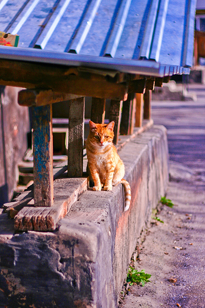 Japanese cat by Emmatyan