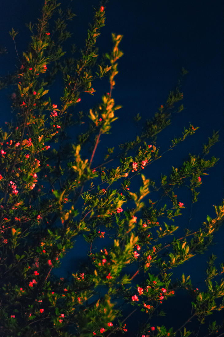 Night blossoms by screenname911