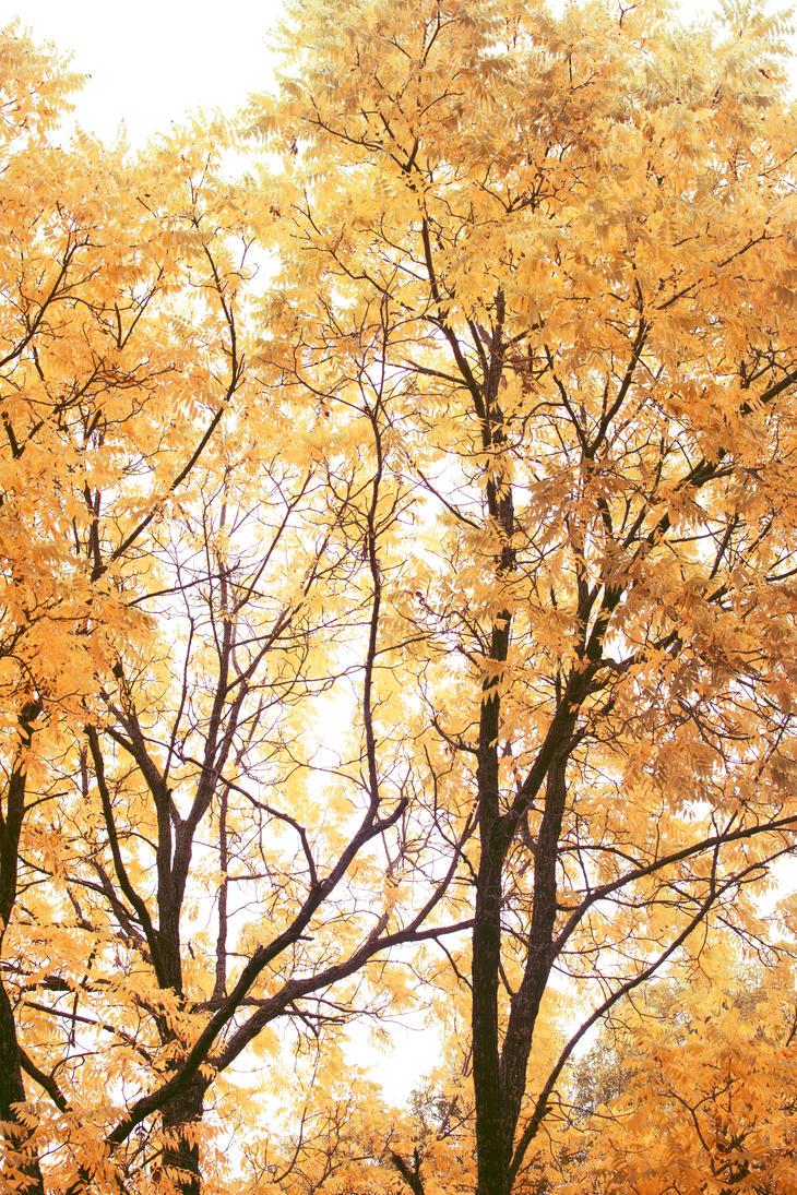 autumn haze by screenname911