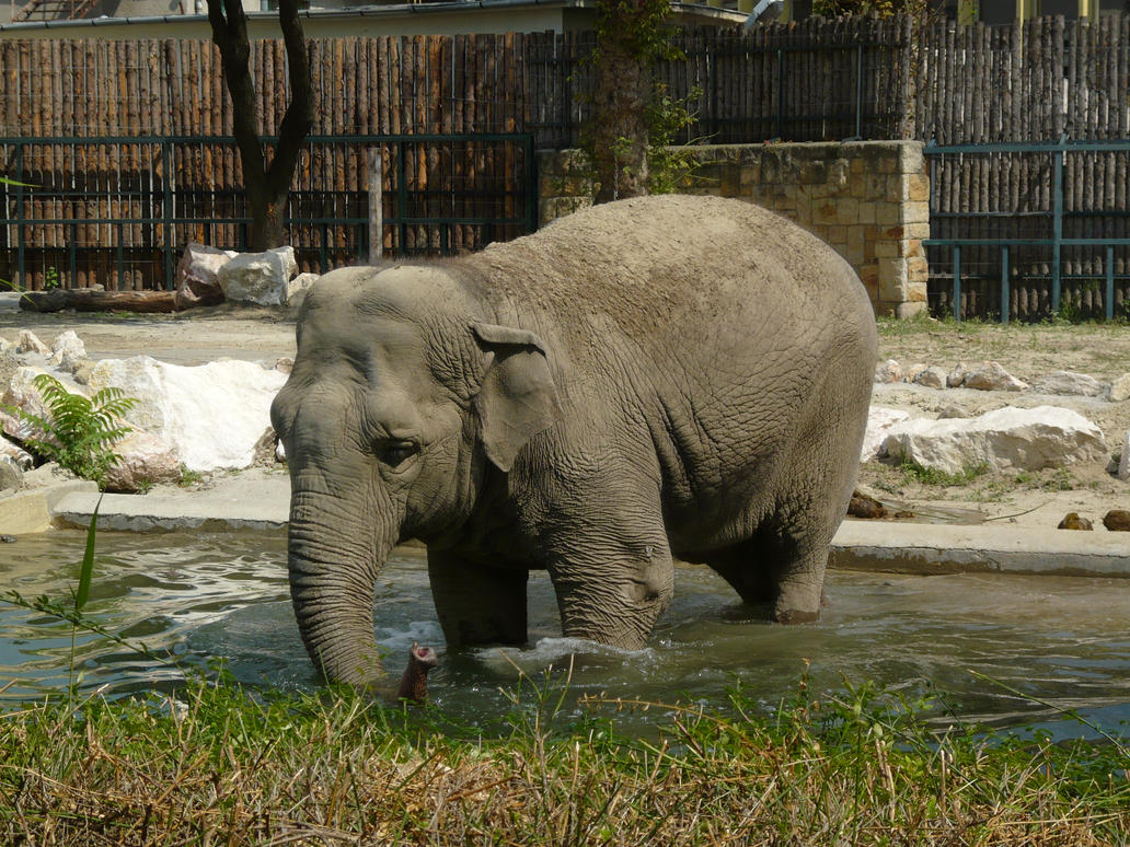 Elephant in the water by Khanzen