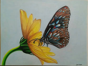 butterfly by davium