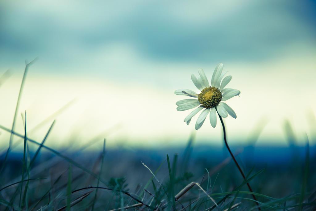 Beautiful Loneliness by Banera