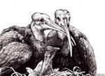Inktober 1 - Waldrapp Ibis