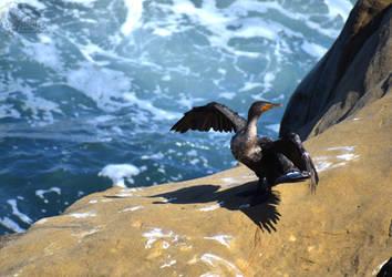 Dramatic Cormorant by Ciameth