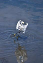 Egret Ballet by Ciameth
