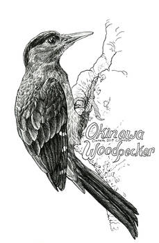 Endangered Inktober - Okinawa Woodpecker