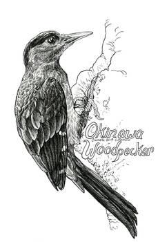 Endangered Inktober - Okinawa Woodpecker