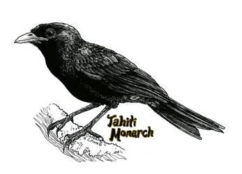 Endangered Inktober - Tahiti Monarch