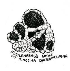 Endangered Inktober - Muhlenberg's Smile