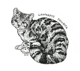 Endangered Inktober - Andean Cat