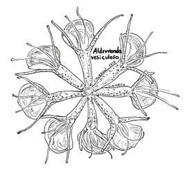 Endangered Inktober - Waterwheel