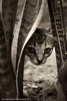 kucing kampung 05 by omoyit