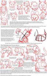 Big Cat Anatomy Sketches