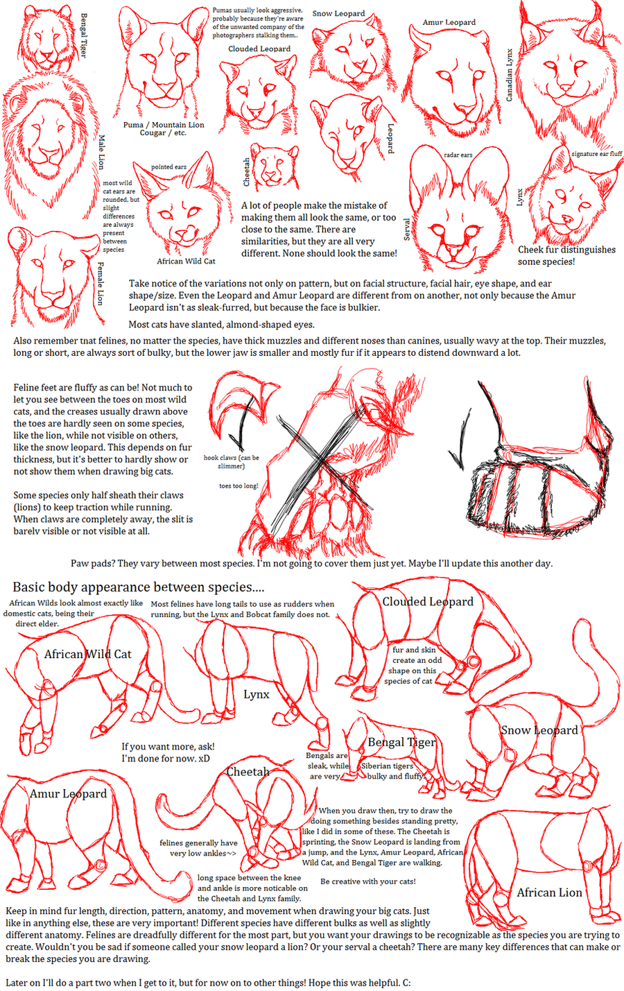 Funky Wolf Anatomy For Artists Inspiration - Human Anatomy Images ...